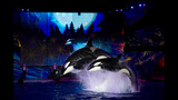 Sights & Scenes: SeaWorld's Christmas Celebration - (7/14)