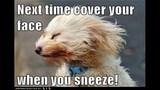 Funny Dog Photos, Even Funnier Captions - (14/25)