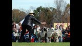 2012 Central Florida Scottish Highland Games - (16/25)