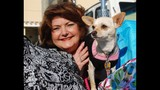 Paws in the Park - SPCA of Central Florida Benefit - (2/25)