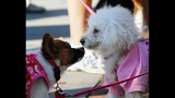 Paws in the Park - SPCA of Central Florida Benefit - (17/25)