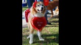 Paws in the Park - SPCA of Central Florida Benefit - (1/25)