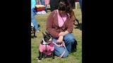 Paws in the Park - SPCA of Central Florida Benefit - (18/25)