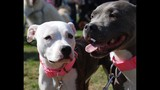 Paws in the Park - SPCA of Central Florida Benefit - (24/25)