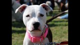 Paws in the Park - SPCA of Central Florida Benefit - (25/25)