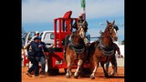 IMAGE GALLERY: 2012 Osceola County Fair - (12/25)