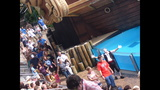 How to enjoy shows at SeaWorld Orlando - (1/7)