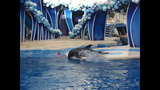 How to enjoy shows at SeaWorld Orlando - (2/7)