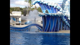 How to enjoy shows at SeaWorld Orlando - (5/7)