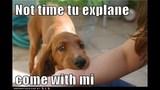 Funny Dog Photos, Even Funnier Captions - (17/25)