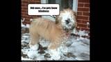 Funny Dog Photos, Even Funnier Captions - (1/25)