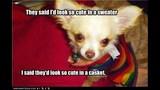 Funny Dog Photos, Even Funnier Captions - (2/25)