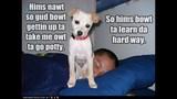 Funny Dog Photos, Even Funnier Captions - (15/25)