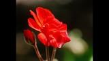 Spring Blooms at Leu Gardens - (25/25)