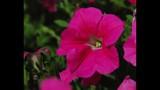 Spring Blooms at Leu Gardens - (5/25)
