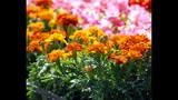 Spring Blooms at Leu Gardens - (13/25)