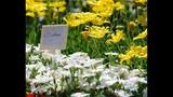 Spring Blooms at Leu Gardens - (11/25)