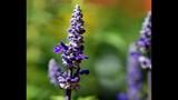 Spring Blooms at Leu Gardens - (9/25)