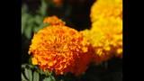 Spring Blooms at Leu Gardens - (15/25)