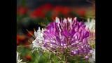 Spring Blooms at Leu Gardens - (18/25)