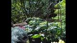 Spring Blooms at Leu Gardens - (17/25)
