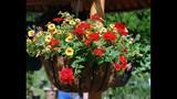 Spring Blooms at Leu Gardens - (6/25)