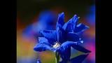 Spring Blooms at Leu Gardens - (4/25)