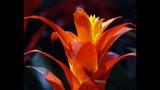 Spring Blooms at Leu Gardens - (7/25)