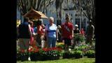 Spring Blooms at Leu Gardens - (21/25)