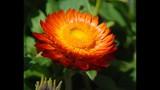 Spring Blooms at Leu Gardens - (12/25)