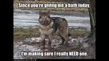 Funny Dog Photos, Even Funnier Captions - (19/25)