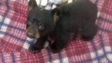 Black bear_1469895