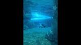 Beat the heat at SeaWorld's Aquatica - (14/15)