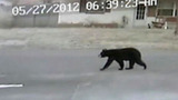 Bear spotted at school bus stop - (6/6)