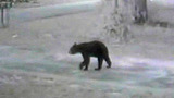 Bear spotted at school bus stop - (4/6)