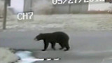 Bear spotted at school bus stop - (3/6)