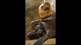 Twin sea lion pups born at SeaWorld - (4/4)