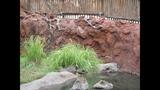 Hidden Mickeys at Animal Kingdom Lodge - (6/7)