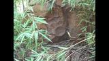 Hidden Mickeys at Animal Kingdom Lodge - (4/7)