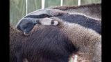 Animal babies at Busch Gardens Tampa Bay - (7/17)
