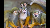 Animal babies at Busch Gardens Tampa Bay - (6/17)