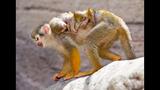 Animal babies at Busch Gardens Tampa Bay - (16/17)
