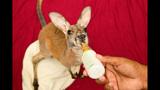 Animal babies at Busch Gardens Tampa Bay - (17/17)