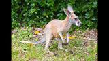 Animal babies at Busch Gardens Tampa Bay - (8/17)