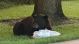 Photos: Bear strolls through neighborhood - (1/9)
