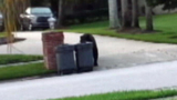 Photos: Bear strolls through neighborhood - (8/9)