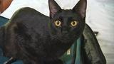 Photos: Ohio cat stows away for Disney trip - (6/11)