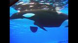 Photos: Dine With Shamu at SeaWorld Orlando - (10/15)