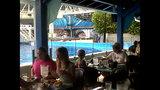 Photos: Dine With Shamu at SeaWorld Orlando - (12/15)