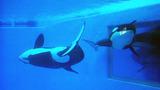 Photos: Dine With Shamu at SeaWorld Orlando - (11/15)